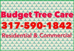 Budget Tree Care
