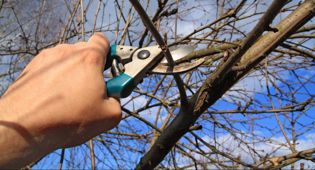 Indianapolis Tree Pruning 317-590-1842